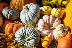 Autumn spirit Royalty Free Stock Photography