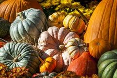Autumn spirit Royalty Free Stock Photos