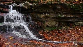 Autumn Splashing Loop stock videobeelden