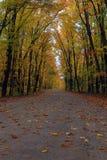 Autumn Splendor Royalty Free Stock Photography