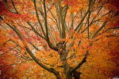 Autumn splendor Stock Photos