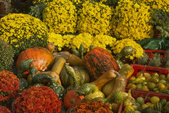Autumn Splendor. Bunch of pumpkins and yellow autumn flowers Stock Photography