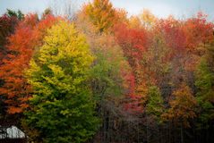 Autumn Splendour Stock Images