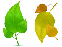 Autumn and Spring Leaves vector illustration