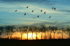 Autumn or spring migration of cranes Stock Photo