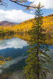 Autumn, spruce over the lake Royalty Free Stock Photos