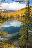 Autumn, spruce over the lake Royalty Free Stock Photography