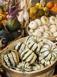 Autumn squash Royalty Free Stock Photo