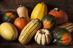 Autumn Squash assorti organique Image libre de droits