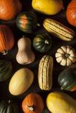 Autumn Squash assortito organico Fotografia Stock Libera da Diritti