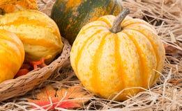 Autumn Squash Closeup Stock Photos