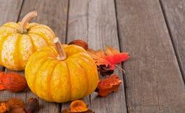 Autumn Squash Stock Photo