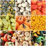 Autumn squash collage Royalty Free Stock Photos