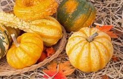 Autumn Squash Stock Images