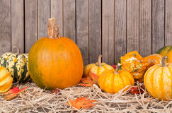 Autumn Squash and Gourds Stock Photography