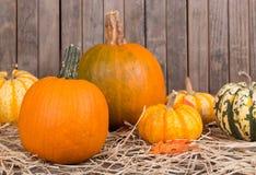Autumn Squash and Pumpkins Stock Images
