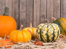 Autumn Squash and Pumpkins Royalty Free Stock Images
