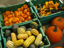 Autumn Squash. For sale in a farmer's market Stock Photography