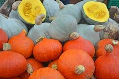 Autumn Squash Varieties Stock Photo