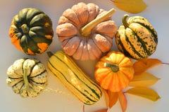 Autumn squashes Stock Photos