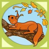 Autumn squirrel Stock Photography