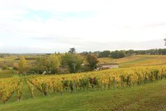 Autumn in St Emilion. Wineyards in St Emilion, France, during autumn stock photos