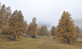 Autumn in St Moritz Royalty Free Stock Photos