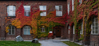 Autumn. Staff offices at KTH in Stockholm Sweden with Autumn Leaves growing on walls Royalty Free Stock Photos