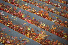 Autumn stairs. A stair with autumn leaves royalty free stock photos