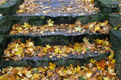 Autumn stairs Stock Images