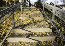 Autumn stairs Royalty Free Stock Images