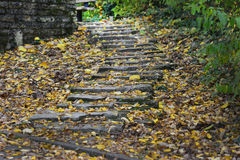 Autumn stairs in the forest. Stairs with foliage in the forest stock image