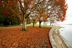 Autumn Of Stanley Park Royalty Free Stock Image