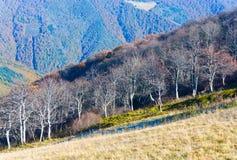 Autumn stark bare trees Stock Photography