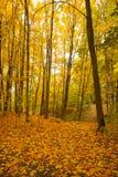 Autumn With Stem Of Trees met Bladeren in Park stock foto