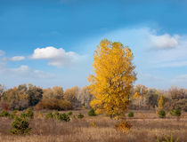 Autumn in steppe Stock Photo
