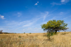 Autumn steppe Royalty Free Stock Images