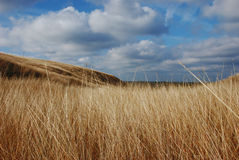 Autumn in the steppe Stock Photos
