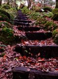 Autumn Steps Stock Photography