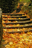 Autumn Steps. Beautiful colors in the fall stock images