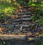 Autumn steps at forest royalty free stock photography