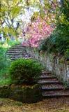 Autumn Steps i portsolljus Royaltyfri Bild