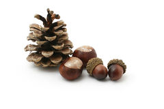 Autumn still. Still life with chestnuts, acorn and a fir cone Royalty Free Stock Images
