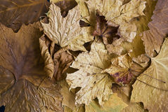 Autumn Still l ife Royalty Free Stock Photo