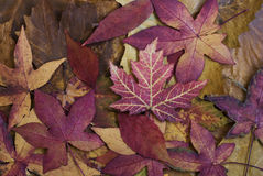 Autumn Still l ife Royalty Free Stock Images