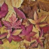 Autumn Still l ife Stock Photo