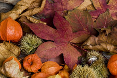 Autumn Still l ife Royalty Free Stock Photography