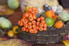 Autumn Still life Stock Photos