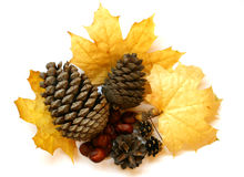 The Autumn still life. Royalty Free Stock Images