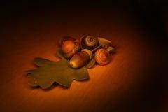 Autumn still-life. Dark autumn still-life with acorns Royalty Free Stock Photos